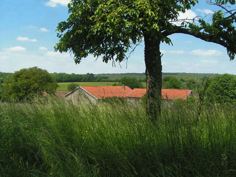 paysage avec une ferme et un cerisier dans un verger en été